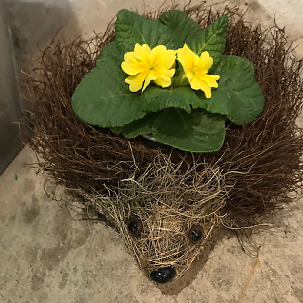 allestree harvest hedgehog