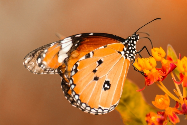 Are our churches harbouring sleepy butterflies?